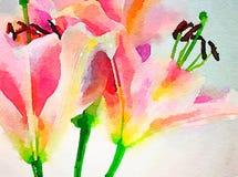 Dzień Lillies w akwareli Obraz Stock