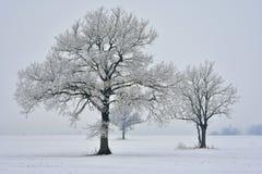 dzień mglista zima Drzewa na polu Fotografia Royalty Free