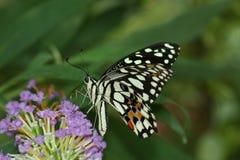 dzień motyli zwrotnik Obraz Stock