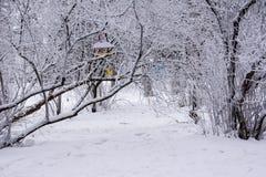 dzie? mrozowa Stycze? natury parka ?nie?na drzew zima ulyanovsk zdjęcie royalty free
