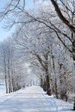 dzień pasa ruchu drzew zima Zdjęcia Stock