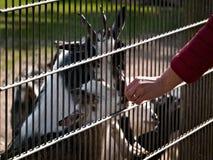 Dzie? przy zoo obrazy royalty free