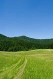 dzień sceny meadow górski sunny lato Fotografia Royalty Free