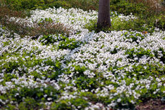 dzień wiosny Obraz Stock
