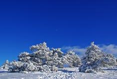 dzień zima Obrazy Royalty Free