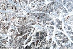 dzień zima Zdjęcia Stock