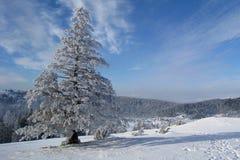 dzień zimna zima Obraz Royalty Free