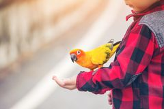 Dzieci dają jedzeniu dla ptaka w parku obrazy royalty free