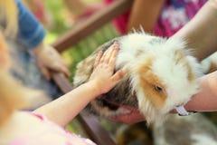 Dzieci dotyka nieśmiałego królika Obrazy Stock