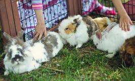 Dzieci dotyka nieśmiałego królika Obraz Stock