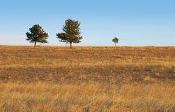 dzieci drzewa mateczni drzewni Obraz Stock