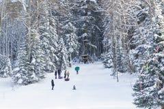 Dzieci i dorosli jadą tubingu nadmuchiwanych wzgórza z śniegiem Pogodny zima dzień w halnym iglastym lasowym drzewie dekorującym Fotografia Royalty Free