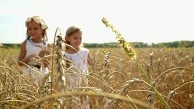Dzieci i natura Piękny dziewczyny ` s russkiya w polu banatka w Rosja Dwa siostry zbierają ucho dojrzały zdjęcie wideo