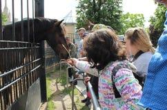 Dzieci karmią konia Zdjęcia Royalty Free