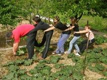 dzieci ojca rośliny rabarbarowy drganie zdjęcia stock