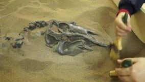 Dzieci paleontologists wykopaliska dinosaura młody kościec zbiory wideo