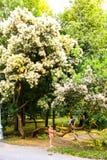 Dzieci pod drzewem Zdjęcia Stock