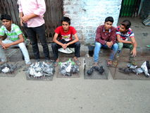 Dzieci sprzedaje gołębia w ulicach fotografia royalty free