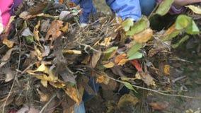 Dzieci trzyma żółtego jesieni ulistnienie ich ręki zdjęcie wideo