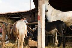 Dzieci w kraju rancho zdjęcie royalty free