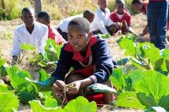 Dzieci w wieku szkolnym uczy się o rolnictwie i uprawiać ziemię zdjęcia royalty free
