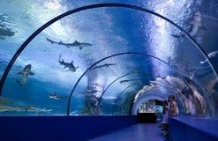 Dzieci w wodnym tunelu Obrazy Royalty Free