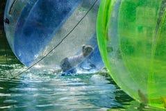 Dzieci zabawę wśrodku plastikowych balonów na wodzie Zdjęcia Royalty Free