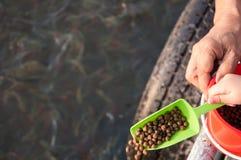 Dzieciak i dorosła karmy ryba Zdjęcie Royalty Free