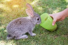 Dzieciak ręka karmi królika obrazy royalty free