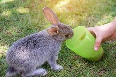 Dzieciak ręka karmi królika obraz stock