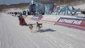 Dzieciak rywalizacji Kamchatka psa sania rasa Dyulin Beringia zbiory wideo