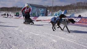 Dzieciak rywalizacji Kamchatka psa sanie Ściga się Dyulin Beringia zdjęcie wideo
