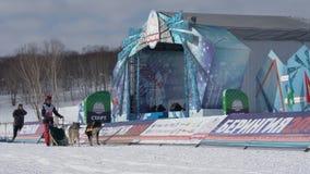 Dzieciak rywalizacji Kamchatka psa sanie Ściga się Dyulin Beringia zbiory wideo