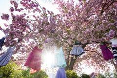 Dzieciak suknie na drzewie Fotografia Stock