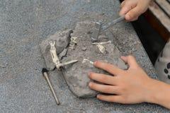 Dzieciak wykopuje Spinosaurus kości Fotografia Royalty Free