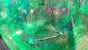Dzieciaki Bawić się w Przejrzyste Wodne Chodzące piłki zbiory wideo