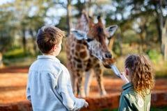 Dzieciaki karmi żyrafy w Afryka Fotografia Stock