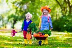 Dzieciaki podnosi warzywa na organicznie gospodarstwie rolnym fotografia royalty free