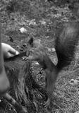 Dzieciom karmią dokrętki z wiewiórkami zdjęcie royalty free