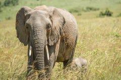 dziecka łydkowa kokosowa słonia rodziny matka blisko palmowego trzonu Zdjęcie Stock