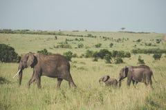dziecka łydkowa kokosowa słonia rodziny matka blisko palmowego trzonu Obraz Royalty Free