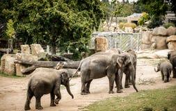 dziecka łydkowa kokosowa słonia rodziny matka blisko palmowego trzonu obraz stock