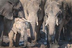 dziecka łydkowa kokosowa słonia rodziny matka blisko palmowego trzonu zdjęcie royalty free