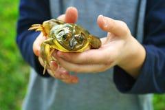 dziecka żaby mienie obrazy stock