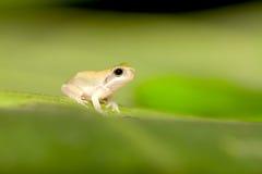 dziecka żaby drzewo Zdjęcia Royalty Free