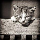 dziecka czarny kota biel Zdjęcia Royalty Free