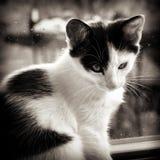 dziecka czarny kota biel Fotografia Royalty Free