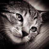 dziecka czarny kota biel Obrazy Royalty Free