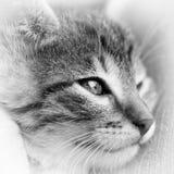 dziecka czarny kota biel Fotografia Stock