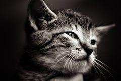 dziecka czarny kota biel Zdjęcie Royalty Free